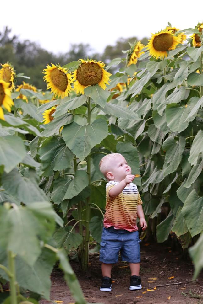 RH_Sunflowers_0010