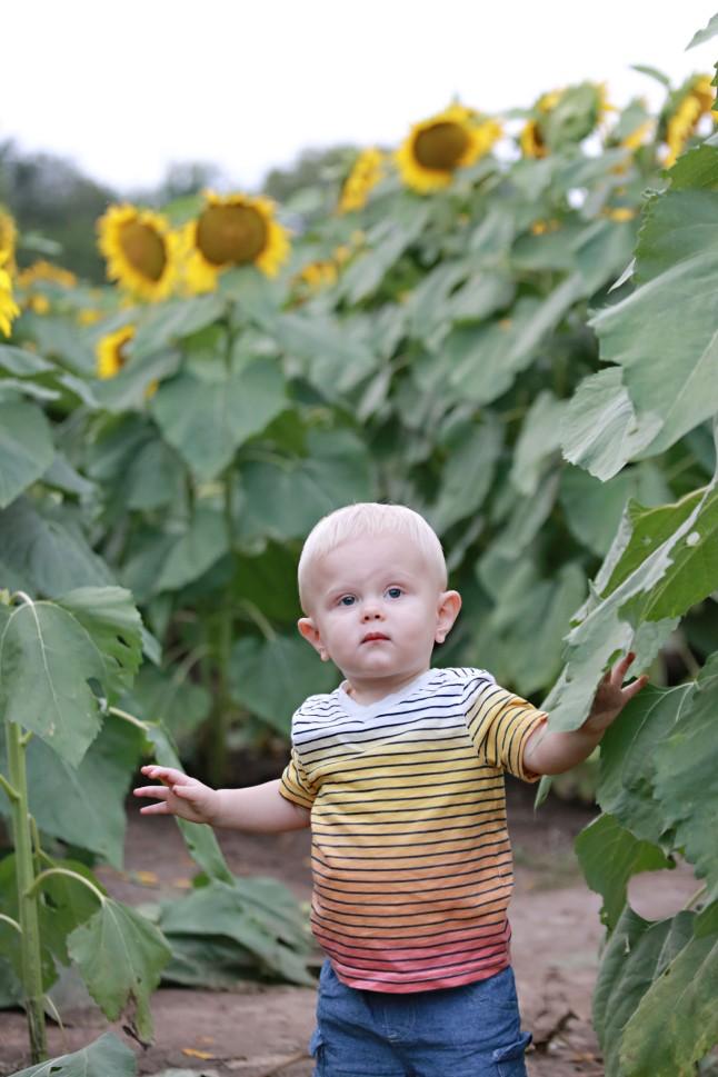 RH_Sunflowers_0011
