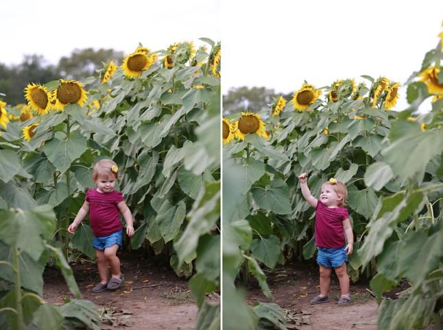 RH_Sunflowers_0012