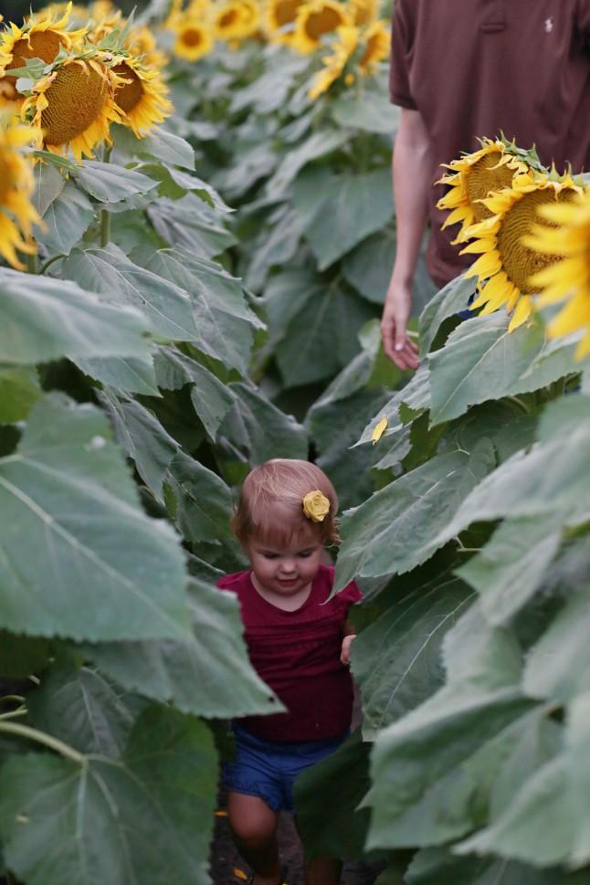 RH_Sunflowers_0016