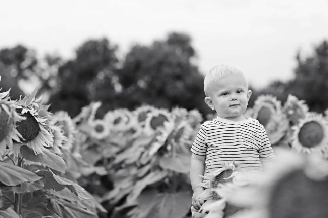 RH_Sunflowers_0017
