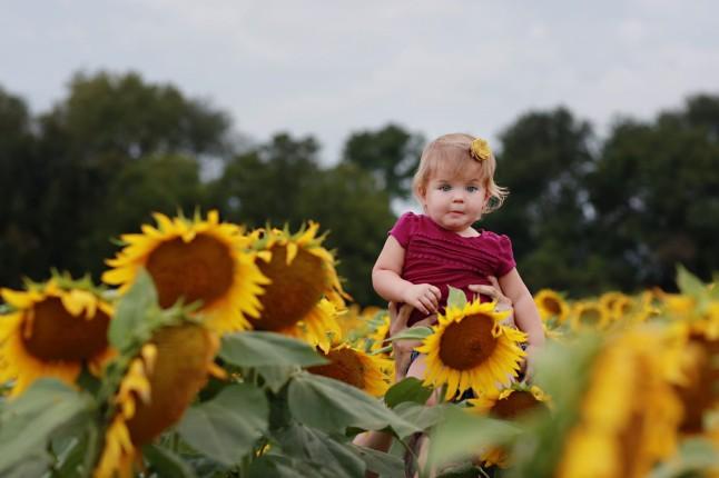 RH_Sunflowers_0018