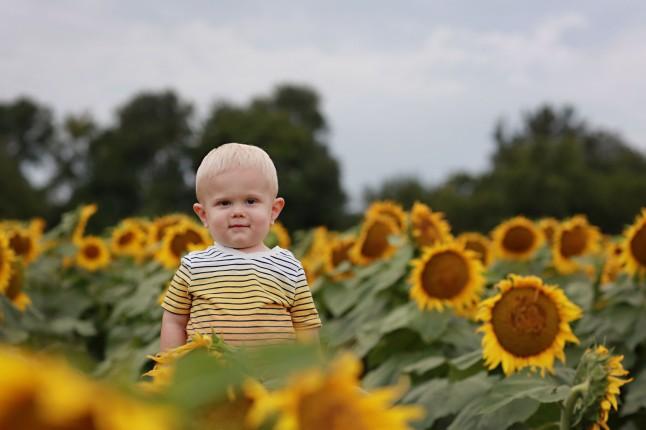RH_Sunflowers_0019