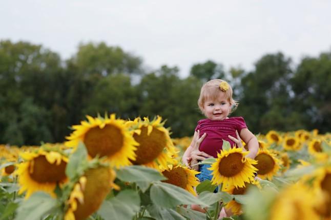 RH_Sunflowers_0020